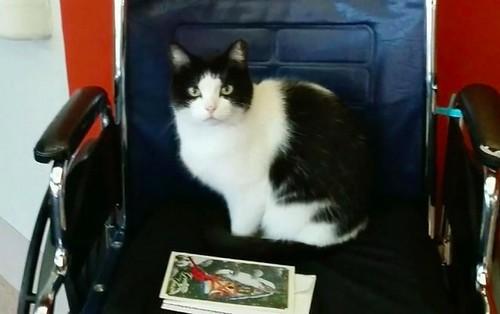 stary-cat-works-nursing-home-oreo-6