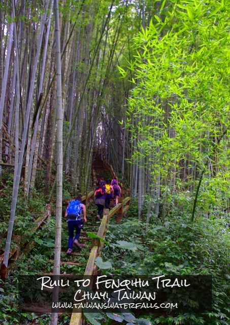 The trail from Ruili to Fenqihu is one of the best places to see Taiwan's famous bamboo and is an excellent dayhike.