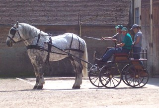 A Horse History Theme Park could offer Carriage Rides
