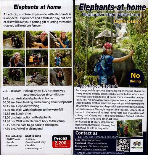 Elephants At Home Chiang Mai Thailand Brochure