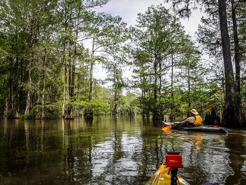 Sparkleberry Swamp-72
