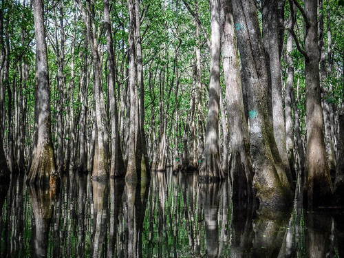 Sparkleberry Swamp-35