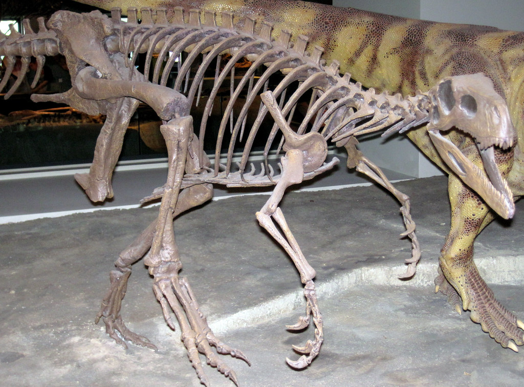 Herrerasaurus Ischigualastensis Theropod Dinosaur Ischigu