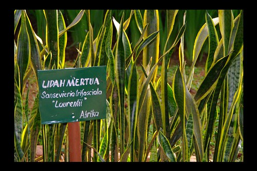 Image Result For Mertua