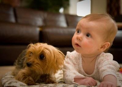 Image result for child + pet