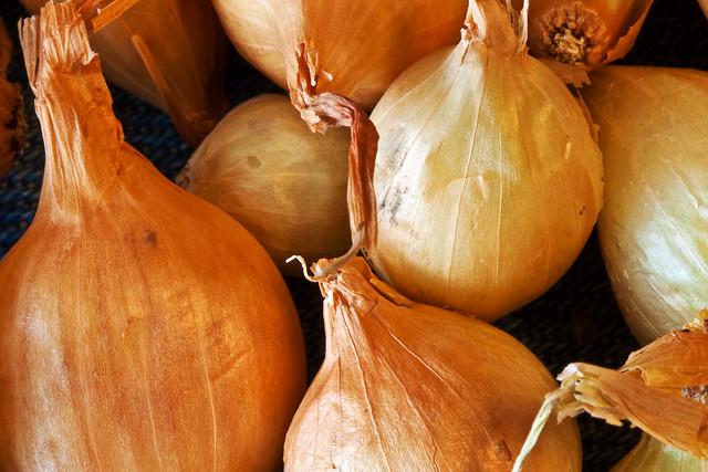 Onion Sets Ready to Plant
