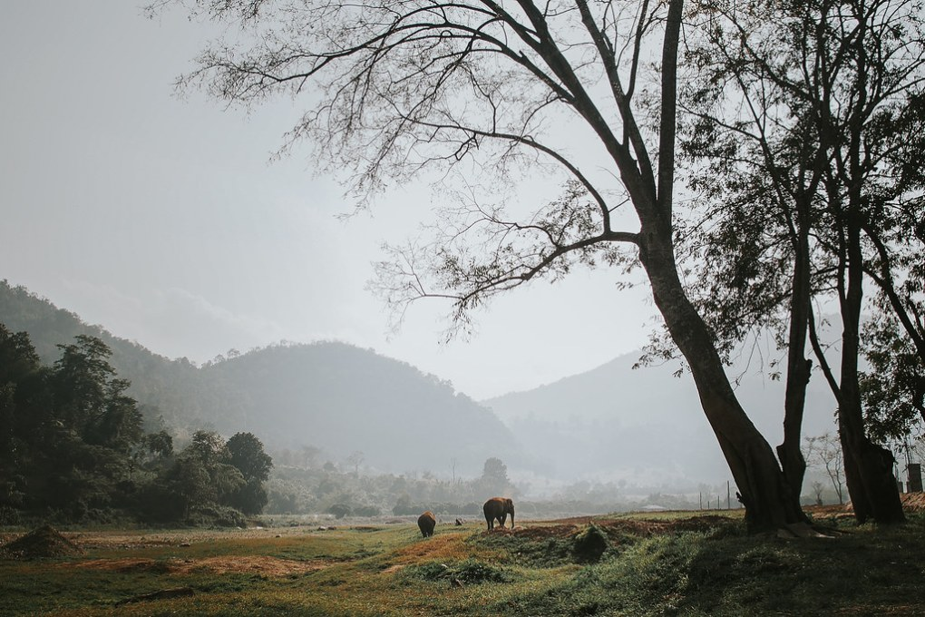 Marjaana_Tasala_Photography_Rimma_Elephant_Nature_Park_Seikkailijattaret-4