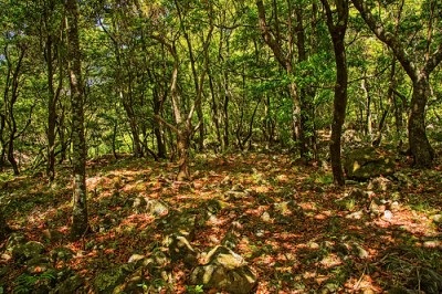 Madeira island: Laurel Forest | In the shade of a Laurel ...