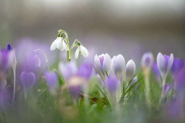 Spring dreams...