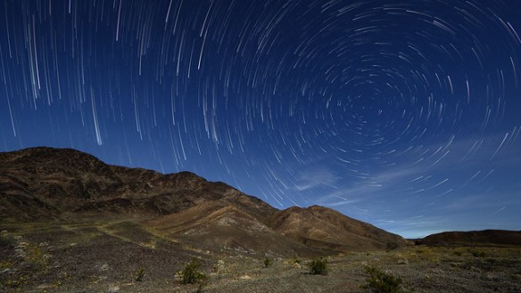 Star Trails Over Desert Sunflowers
