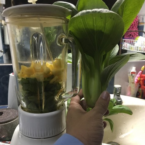 Green smooties of hydroponic Pak Choy