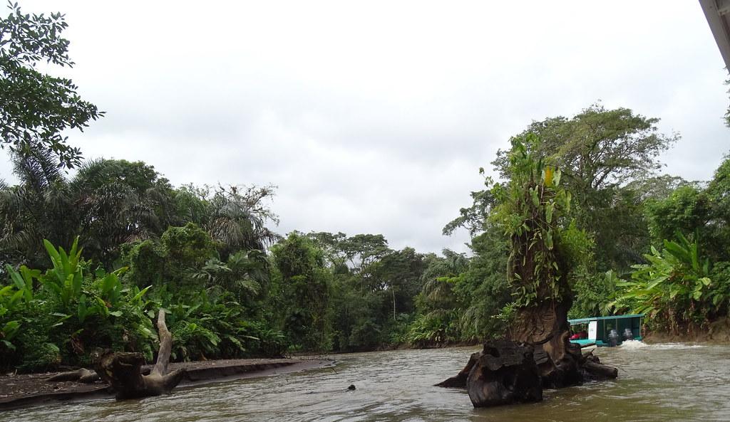 Costa Rica recorrido en lancha desde La Pavona hasta Tortuguero 10