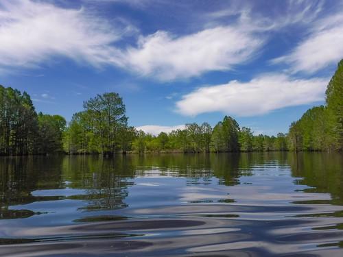 Sparkleberry Swamp-85