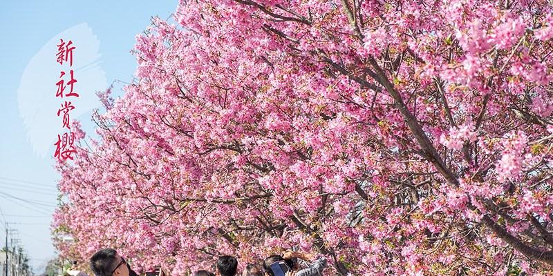 【台中】。新社櫻花景點 興社街整排粉紅櫻滿開!
