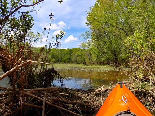 Dyar Pasture and Lake Oconee-3