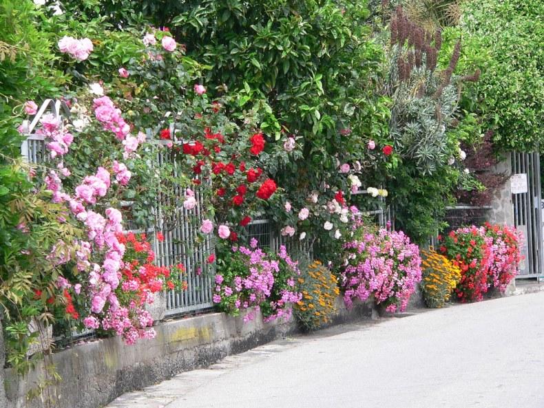 Flowers in Corniglia