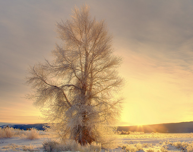 Grand Teton Winter Sunrise