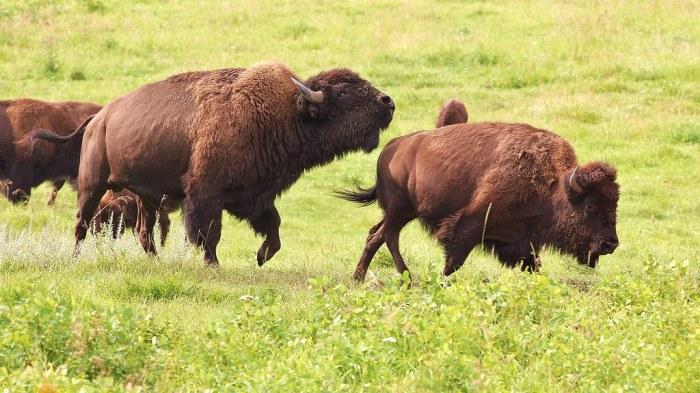 Elk Island National Park
