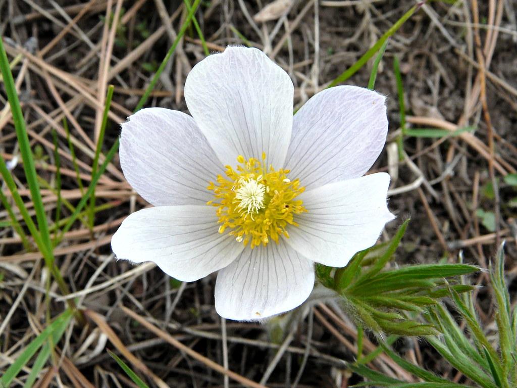 6 Petals White Flower Graphic Organizer