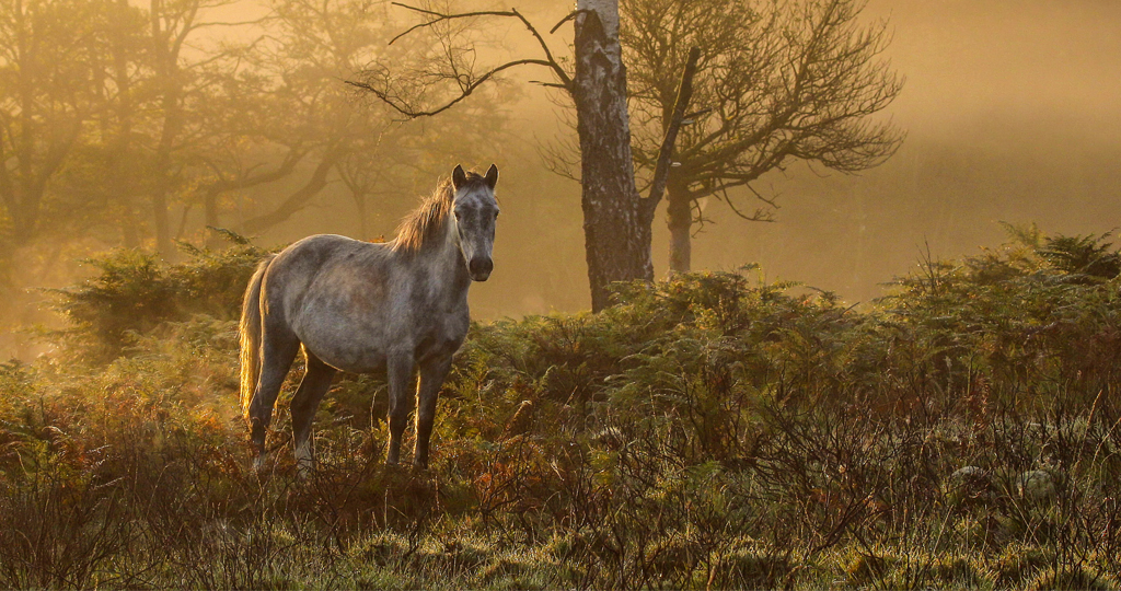 The New Forest Pony The New Forest Pony It Was A