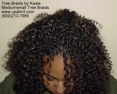 Tree Braids Curly TreeBraids Or Interlock Tree Braids