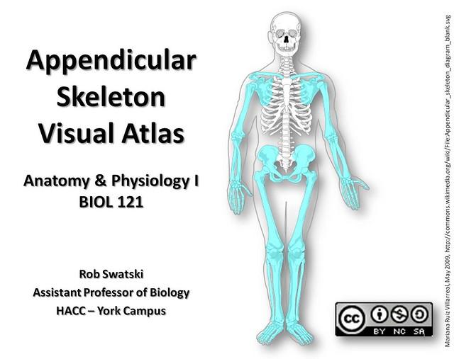 Appendicular Skeleton Anatomy Games