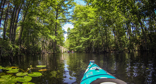 Old Santee Canal-114