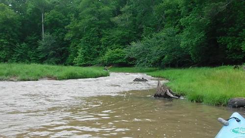 Surprise Rapid on Long Cane Creek