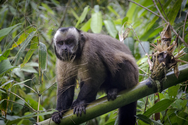 Parque Nacional del Manu.