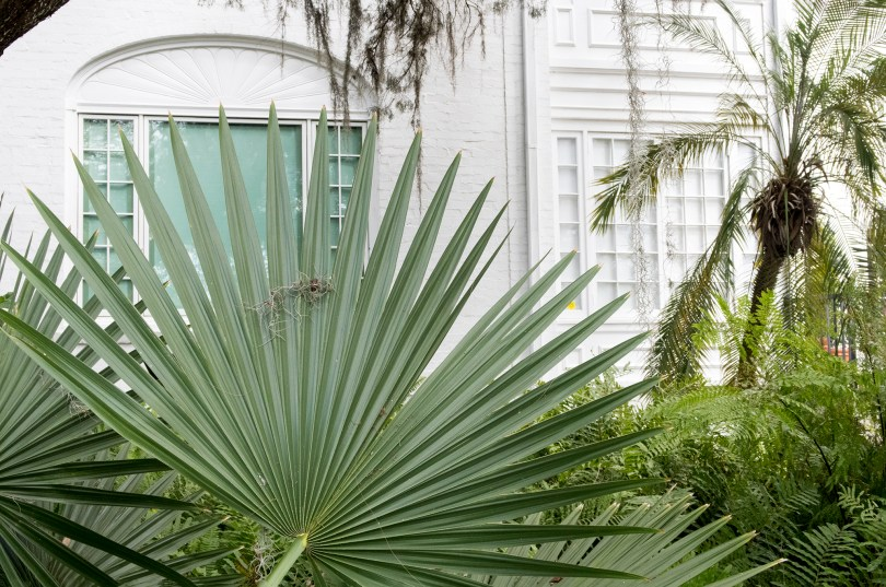 selby-botanical-gardens-house-palms