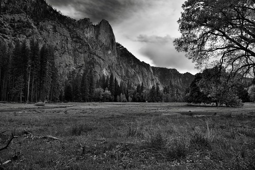 A Meadow to Take in Trees and Nearby Mountain Peaks (Black & White, Yosemite National Park)
