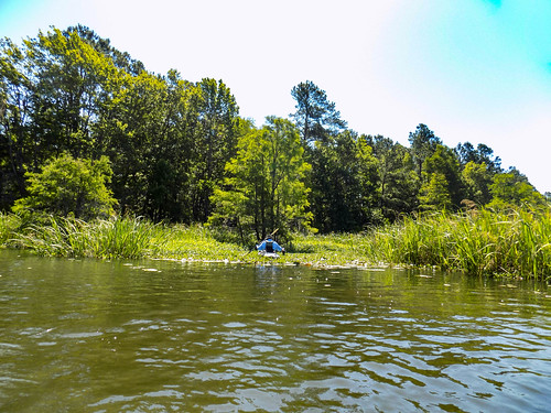 Old Santee Canal-20