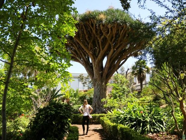 Hijuela Botanico La Orotava