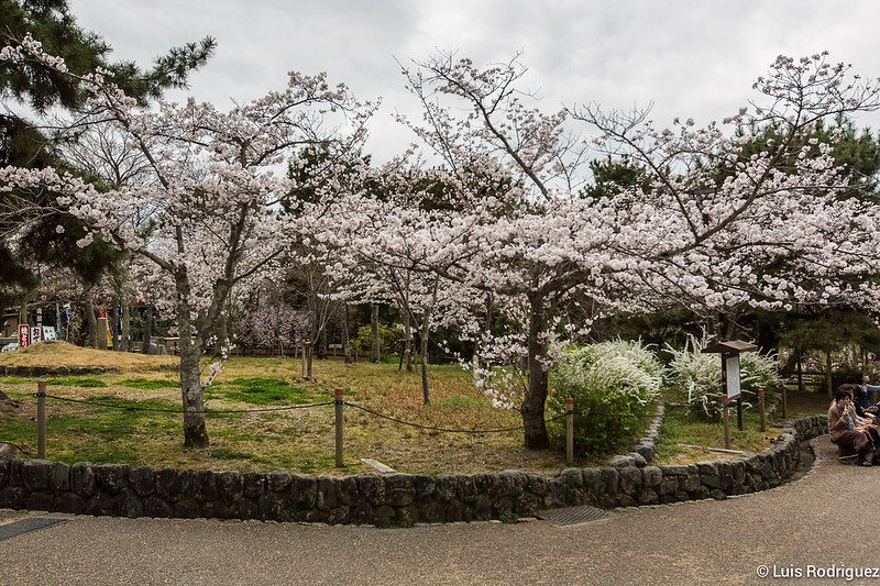 Maruyama-Park-Kioto-35