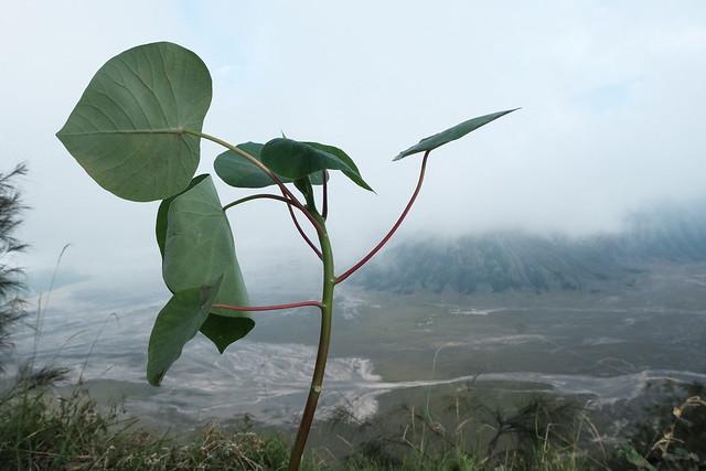 menanam-pohon-bukit-cinta