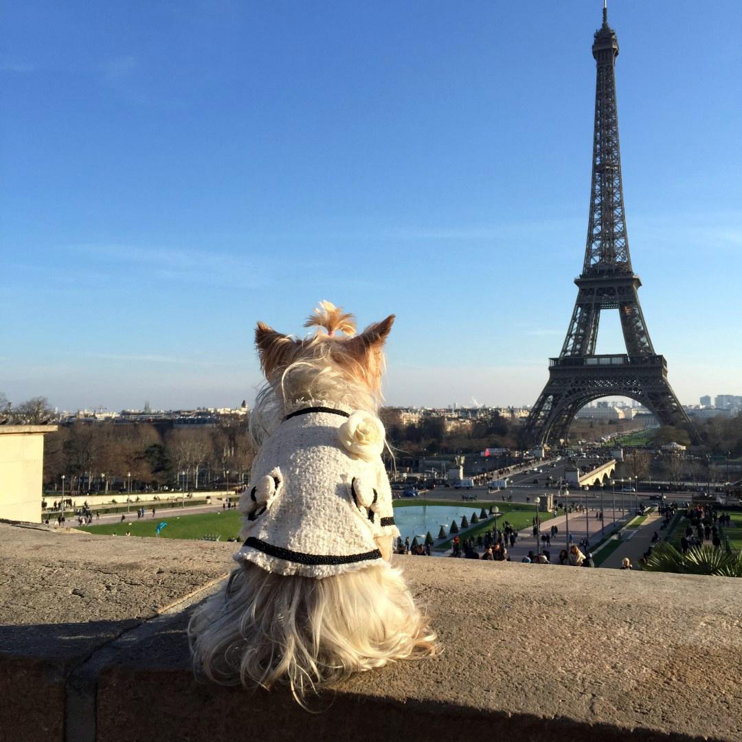 Viajar a Paris con Perro - Travel to Paris with dog viajar a paris con perro Viajar a Paris con perro 34471061991 f105f4dc9e o