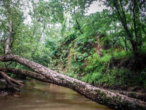 Bradley Mill on Long Cane Creek