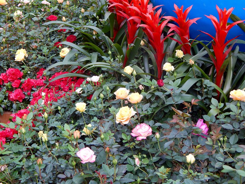 City Girl City Stories: HK Flower Show 2017