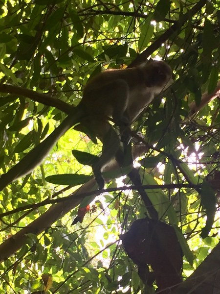 Seeing Macaques is so normal in this trail.