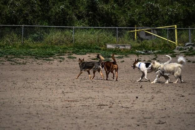 Dog Park in Golden Gate Park