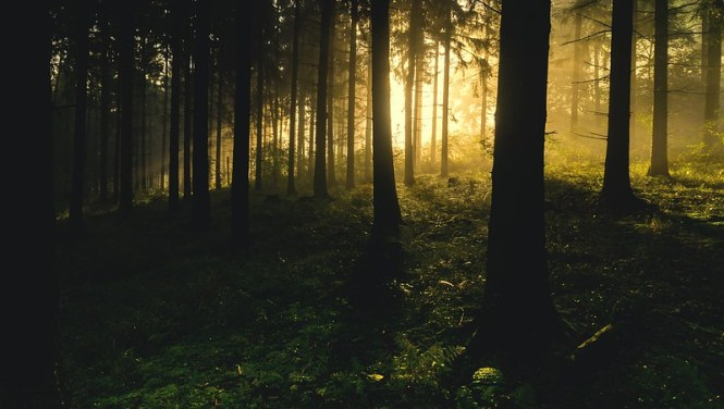 backlit-1867975_960_720