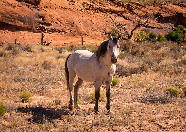 Comb Ridge Horse
