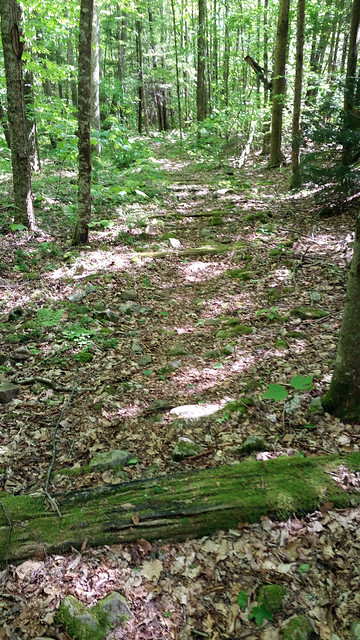 20170603_Tea_Creek_Wilderness_050
