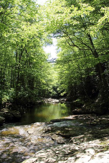 20170603_Tea_Creek_Wilderness_024