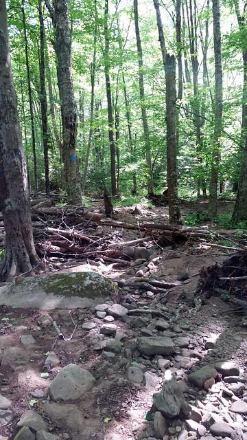 20170603_Tea_Creek_Wilderness_052