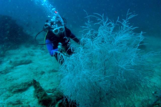 Scuba Diving in Jagna