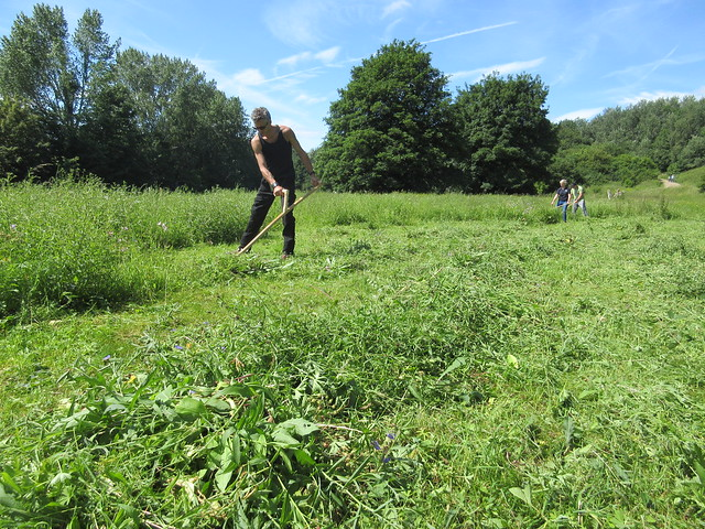 Learn to scythe in Cheshire