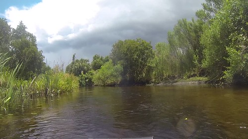 Juniper Springs Creek-012