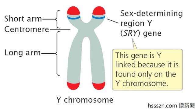 SRY gene_698_390