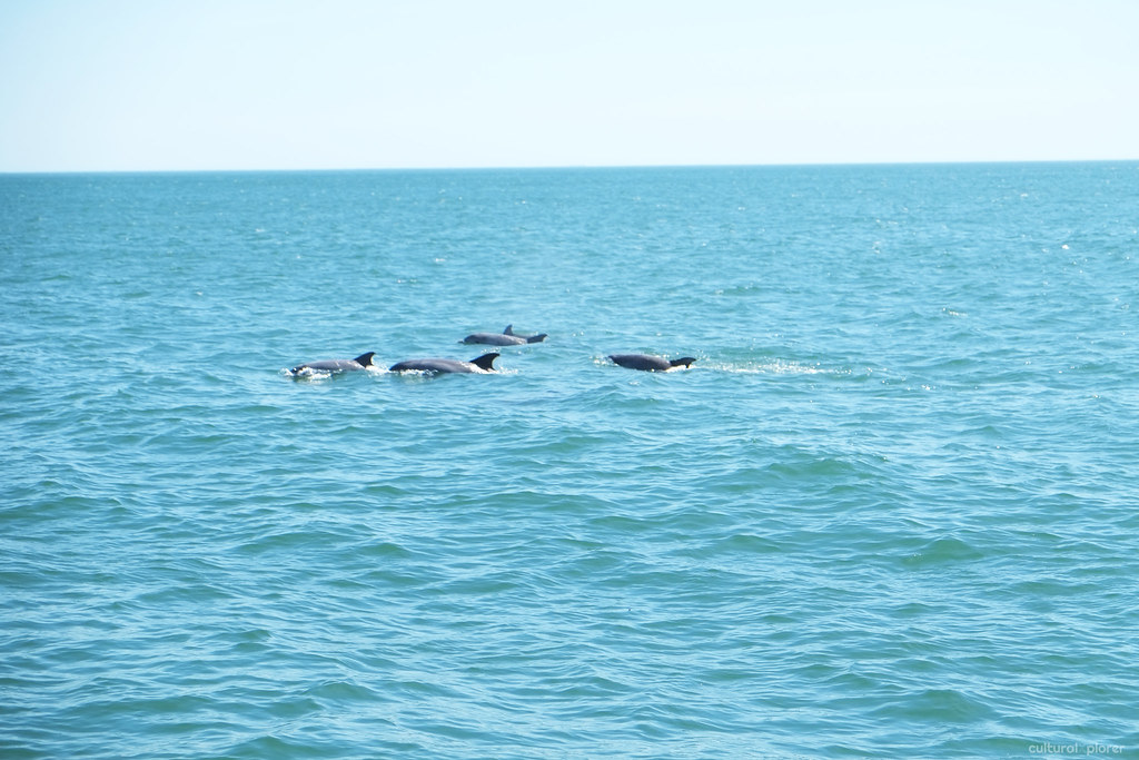 Dolphins Virginia Beach